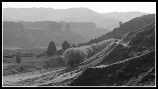 On the way back from Muriwai, this is near Mohaka
