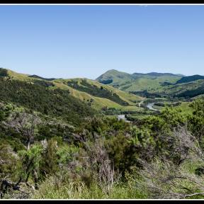 Out towards our glorious and diverse coast and up on the hills with a great flowering of manuka.