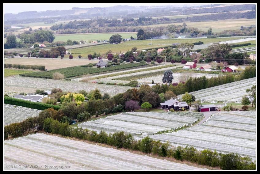 Martinborough vineyards.